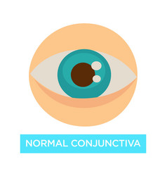 Normal conjunctiva healthy eye pupil and iris vector