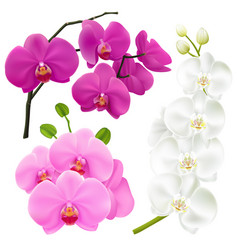 Orchid flowers realistic colorful set vector