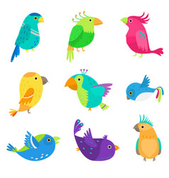 set colorful exotic and tropical parrot cute vector image