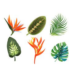 Set tropical plants exotic flowers and leaves vector