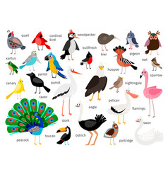 european and asian bird set vector image