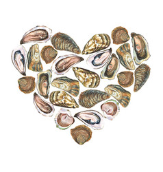 Heart with watercolor oysters on white background vector