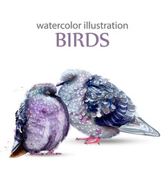 Pigeon birds watercolor colorful painted vector