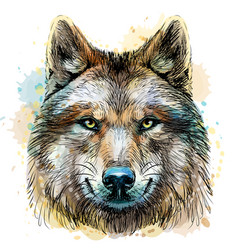 sketchy graphical color portrait a wolf head vector image