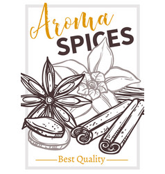 aroma eco spices hand drawn poster template vector image