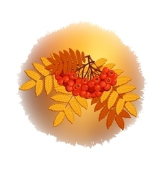 Autumn branch of rowan leaves and berries vector