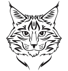beauty cat vector image