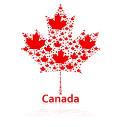 Canadian maple leaf vector