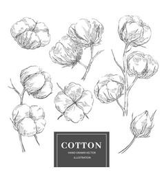 Cotton sketch branch collection vector