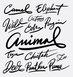 Wild animal and camel hand written typography vector