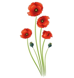 Poppies summer time vector