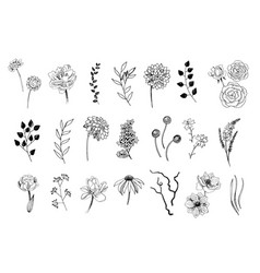 set hand drawn flowers leaves and plants vector image
