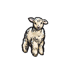 Sketch cartoon style lamb isolated vector