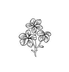 Summer frangipani tropic flower exotic plumeria vector