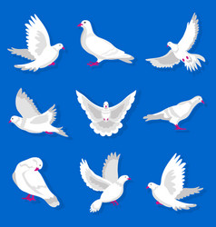 White cartoon pigeon with red beak and paws vector