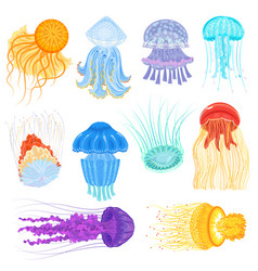 jellyfish ocean jelly-fish and underwater vector image