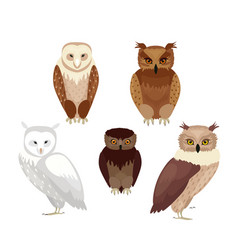 realistic owls set vector image