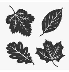 Leaves Silhouette vector image vector image