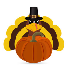 Funny turkey peligrimm with a pumpkin for vector
