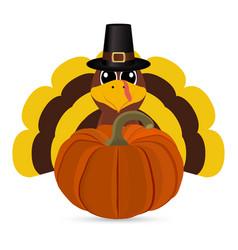 Funny turkey peligrimm with a pumpkin vector