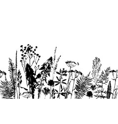 Herbal seamless pattern botanical border vector