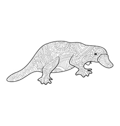 Platypus coloring book for adults vector image vector image