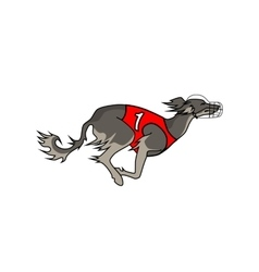 Running dog saluki breed vector