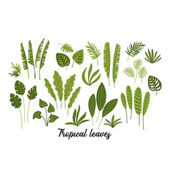 set abstract tropical leaves vector image