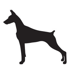 Shadow doberman dog vector