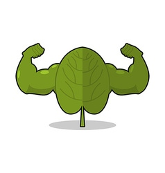 Spinach strong Useful Herbs with big muscles Green vector image