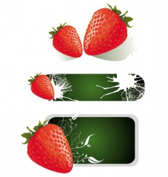 strawberry food design vector image vector image