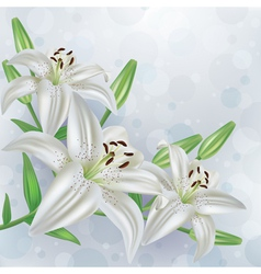 Stylish floral background bouquet of flower lily vector image