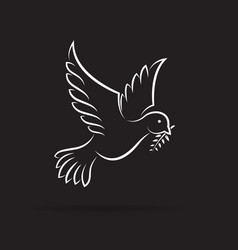 white dove of peace with olive branch on black vector image