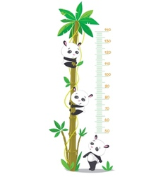 Meter wall with palm tree and three funny pandas vector image