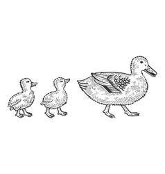 Duck with ducklings sketch vector