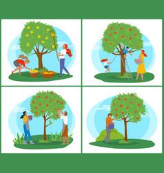 Gardener picking apples farmer in orchard vector