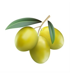 Green olives with leaves vector image