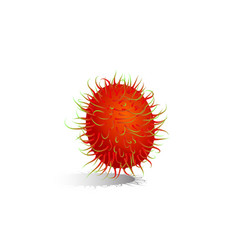 rambutan is fruit asean vector image