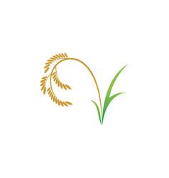 Rice organic icon vector