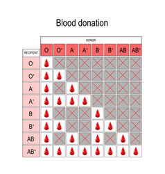 Blood donation chart recipient and donor vector
