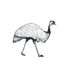 Emu vector