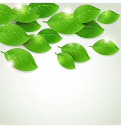Falling fresh green leaves vector image