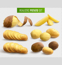 realistic potato set vector image