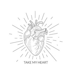 Take my heart quote human heart anatomical sketch vector