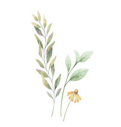 watercolor arrangement green branches vector image
