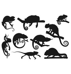 chameleon lizard animal reptile silhouettes icons vector image