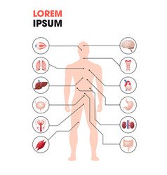 human body structure infographic poster vector image