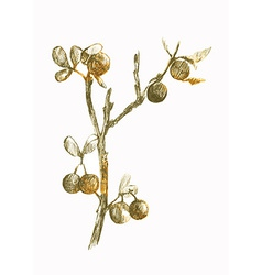 Nature blackthorn vector