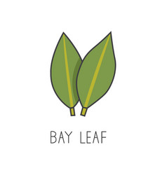 Bay leaf line cooking vector