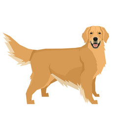 Dog golden retriever geometric isolated object vector